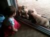 puppy-at-door