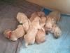 pups1wk-copy