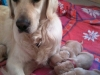 rosie-and-pups-copy