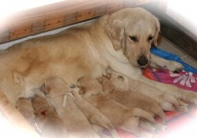 rosie with pups